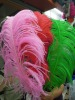 2011 Top new very hot selling Ostrich feather extensions for hair extensions(BD-11082503)