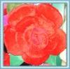 2011 fashion rose shape pillow