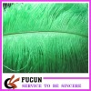 2012 Hot saled Ostrich Feather for decoration