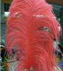 2012 Real Ostrich Feather Extension for Hair