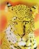 Animal printed polyester double sided brush fleece blanket