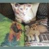 Children love animal cushion