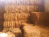 Coir Fibre (Coconut Fibre)