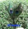 Decorative Peacock Feather
