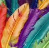Dyed Feather
