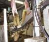 English Lamb Skins at Abattoir-2