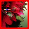 FREE SHIPPING FEDEX/DHL FACTORY OUTLETS 15-20CM QUALITY PRODUCTS wholesale grizzly rooster feather