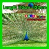 Free shipping DHL/FEDEX Top quality length 110cm-120cm eye-width 3cm beautiful natural peacock feather