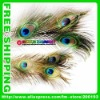 Free shipping DHL top quality 100pcs/lot length 30cm-60cm-70cm-80cm-90cm-100cm-110cm-120cm eye-width3cm natural peacock feather