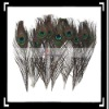 Hot!! 10 x 30cm Natural Peacock Feather House Decoration