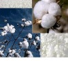 Indian Raw Cotton S-6
