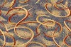 Luxuriant Axminster Carpet