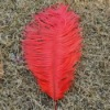 Ostrich feather, natural ostrich feather, real feather decroation