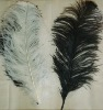 Ostrich feather, real sotrich feather, decorative ostrich feather, wedding feathers, tail feathers, party ostrich feathers,