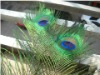 Peacock feather, Peacock eye feather, peacock tail feather, wedding feather, decorative natural peacock feather,