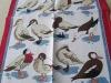 Pure linen silk screen printed tea towels kitchen towel dish cloth