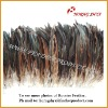 Wholesale Natural & Dyed Coque Tail Feathers