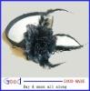 black Feather Flower Headband or collar flower