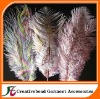ostrich feather with motif