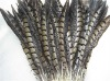 roster feathers,Pheasant Feather, grizzly rooster feathers, hair feathers wholesale