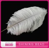 top level ostrich feather